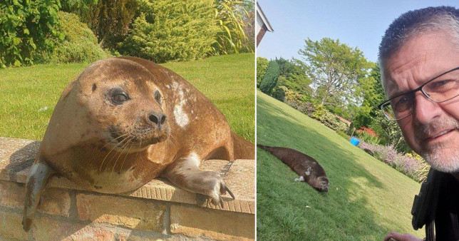 The woman spotted the adventurous female – named Dandy by locals – sprawled out on her lawn in Billinghay, Lincolnshire.