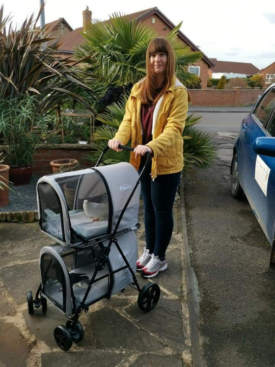 MEGGY JOHNSON TAKING HER RESCUE PIGEON CLEE AND DOVE SNOWY FOR A WALK IN HER BIRD STROLLER