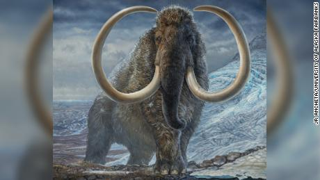Mammoths were the original 'ice road truckers,' traveling vast distances across the Arctic