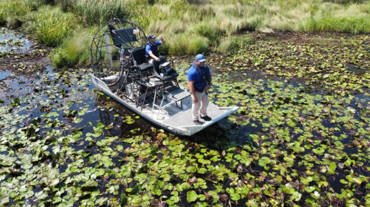 Officials search for an alligator in a swamp from an airboat.