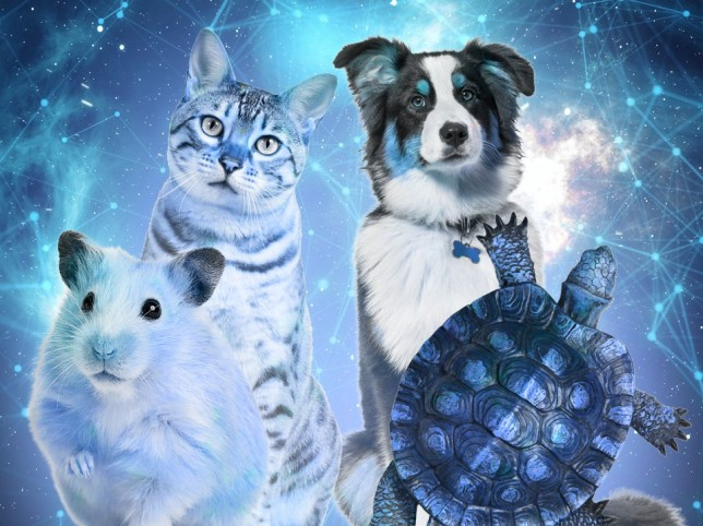Astrologer reveals your perfect pet based on your star sign