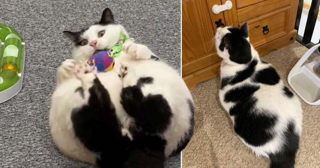 pictures of keith the fat cat