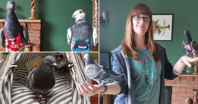 pictures of a woman with her beloved pigeons
