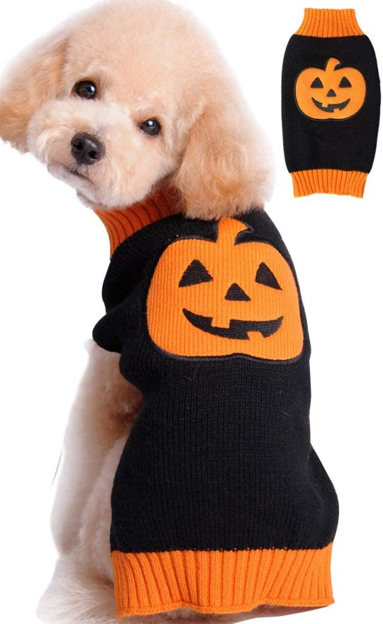 Pumpkin sweater for dogs
