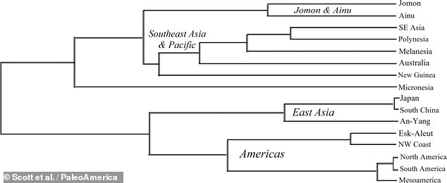 Professor Scott and colleagues undertook a statistical analysis of date on thousands of ancient teeth from across the Americas, Asia and the Pacific. The team found little of a relationship between the the Jomon people of Japan (top and Native Americans (bottom) — with only 7 per cent of the Jomon teeth samples able to be linked to the First Peoples
