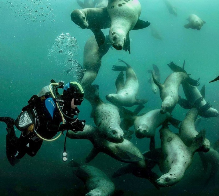 Seals playing with a diver in a seaside suburb of Cape Town.