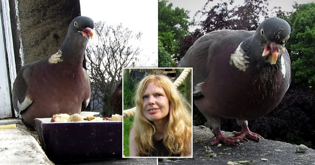 Gaia Holmes and her friend Elvis the pigeon.