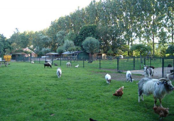 Kinderboerderij-Otterspoor (4)