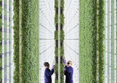 Opinie: de toekomst van de voedingsindustrie