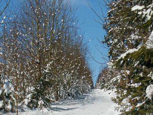 Grenstocht sneeuwlandschap