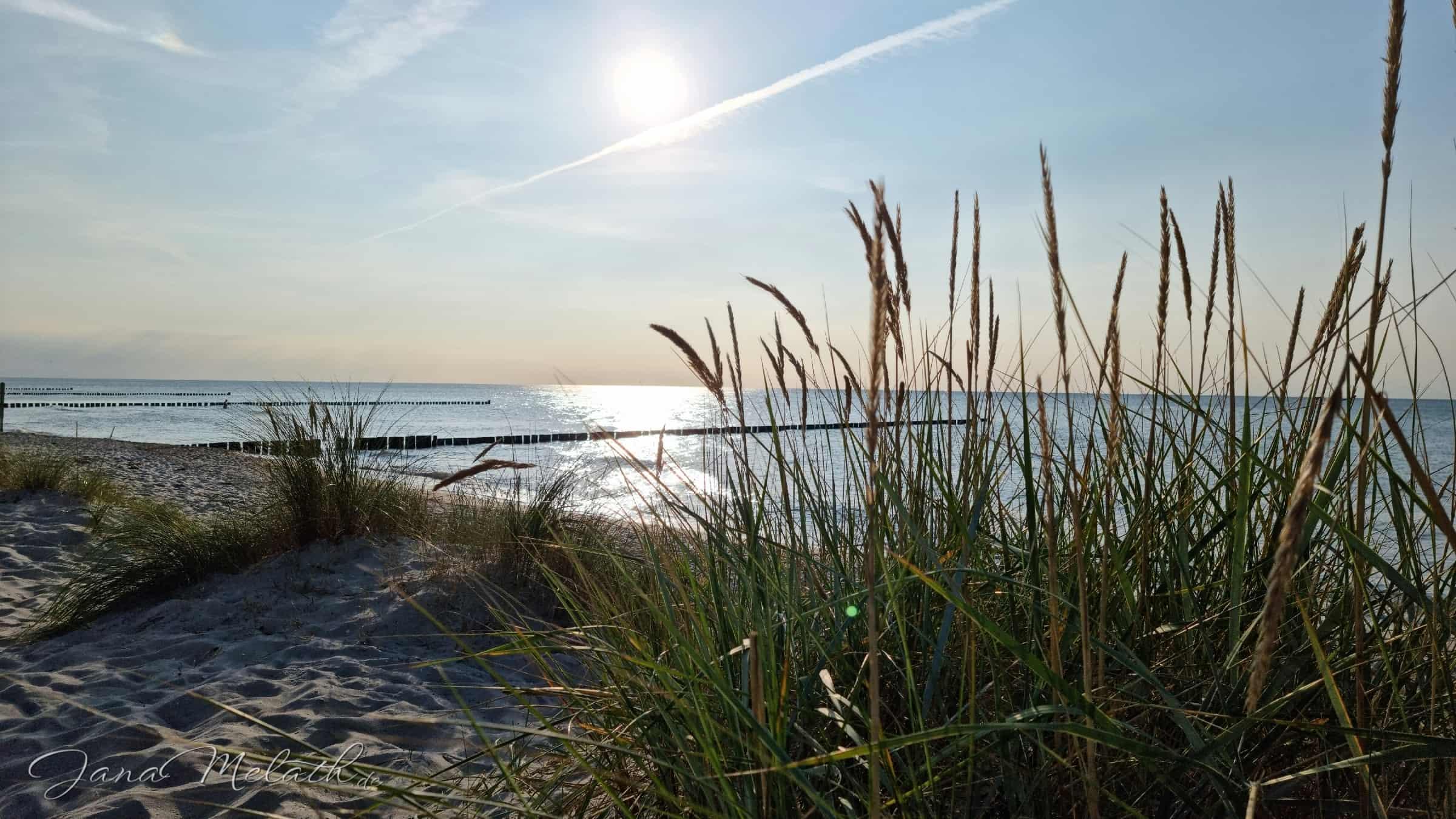 Urlaubserinnerungen - Strandhafer