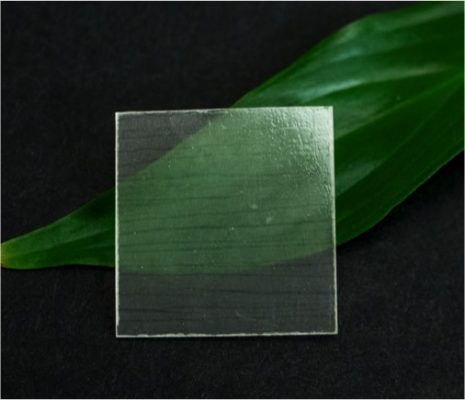 Transparent wood on a leaf