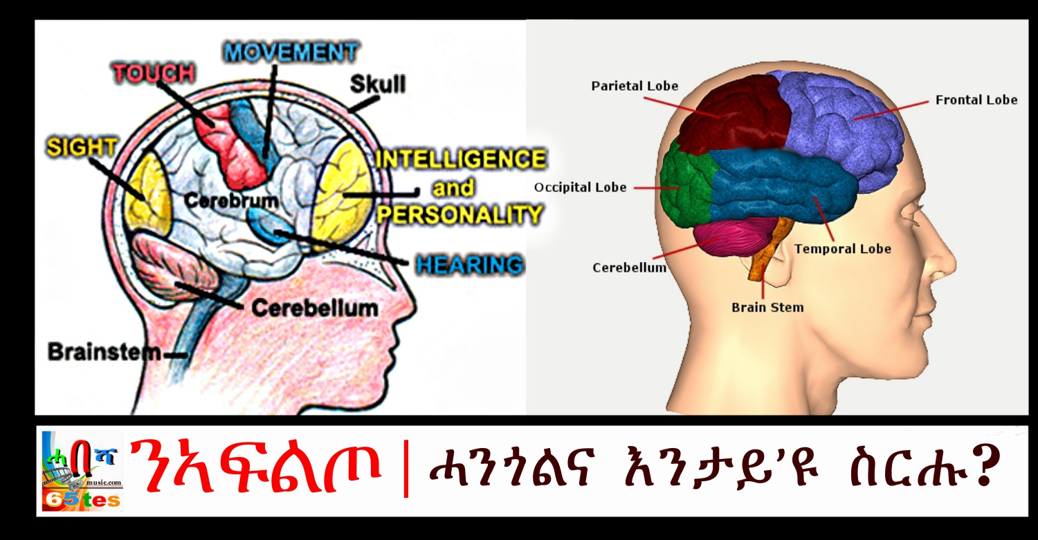 brain-and-its-function
