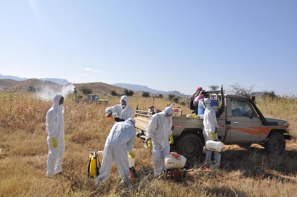 The locust swarm has inflicted no damage on crops and grazing areas
