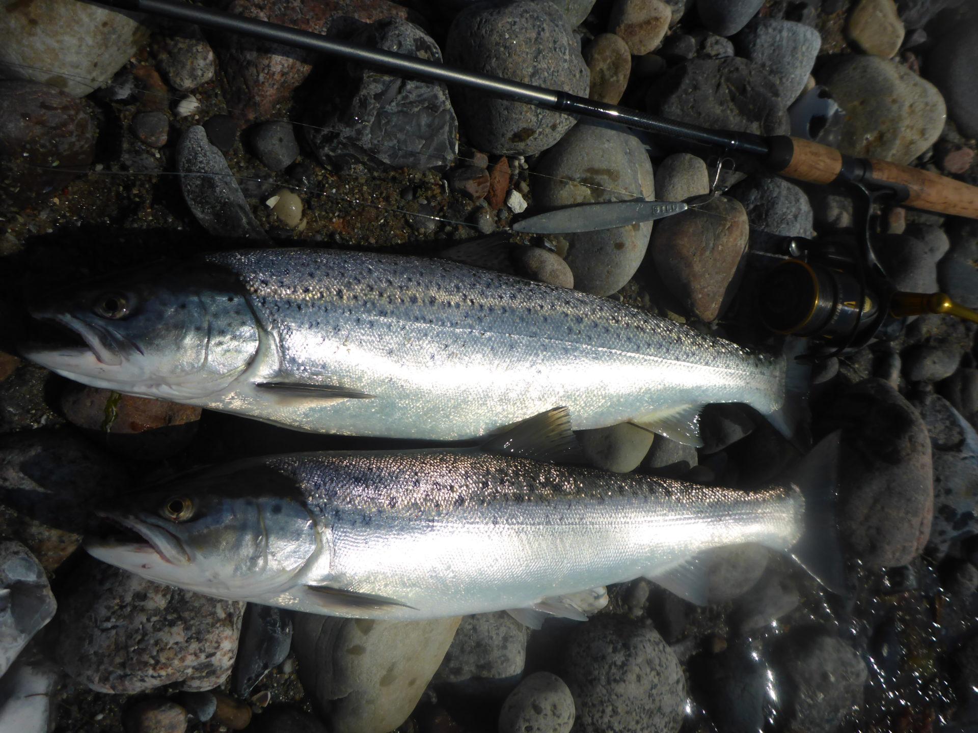 Lystfiskeri i Aabenraa Fjords forlængede arm, Genner Bugt, er altid en fiskedag eller 2 værd.