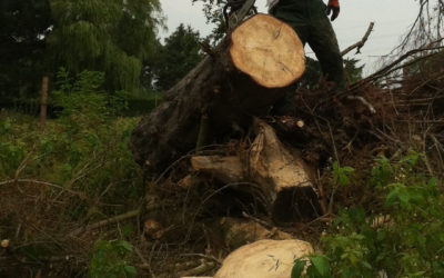 Skoven ved Aalykke – del 2