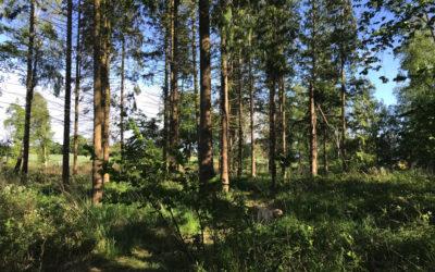 Skoven ved Aalykke – del 3