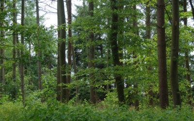 Skoven ved Aalykke – del 1