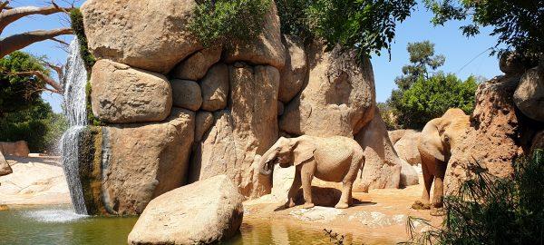 2 elephants at bioparc valencia