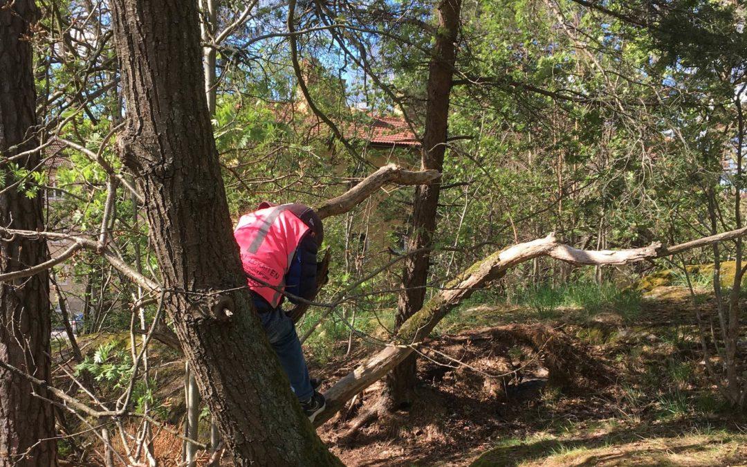 Barnen på Förskolan Lokatten utforskar naturen!