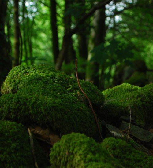 shinrin-yoku | bosbaden | helende natuur | 9