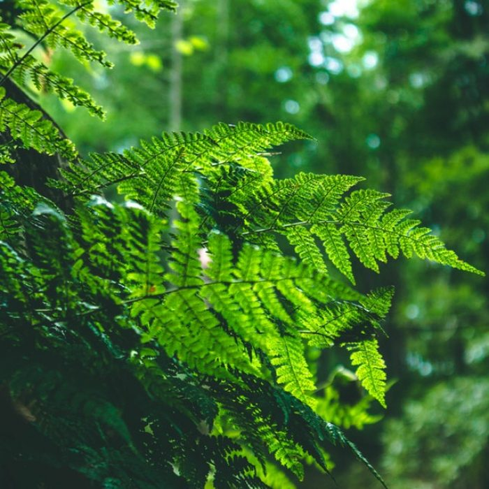 shinrin-yoku | bosbaden | helende natuur | 5