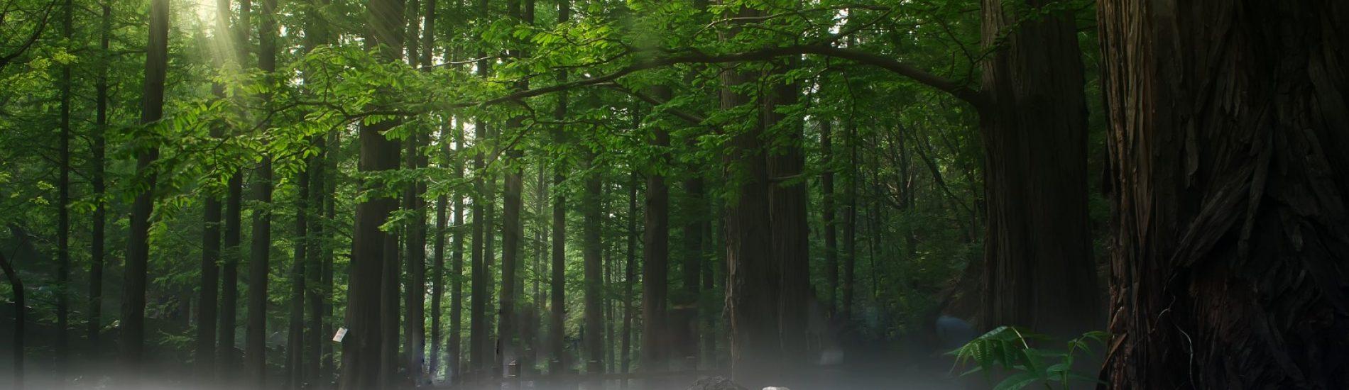 shinrin-yoku | bosbaden | helende natuur | 2