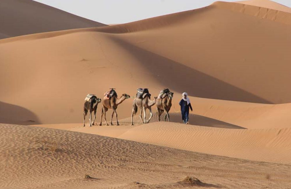 Marokko Wüstensafari mit Kamele