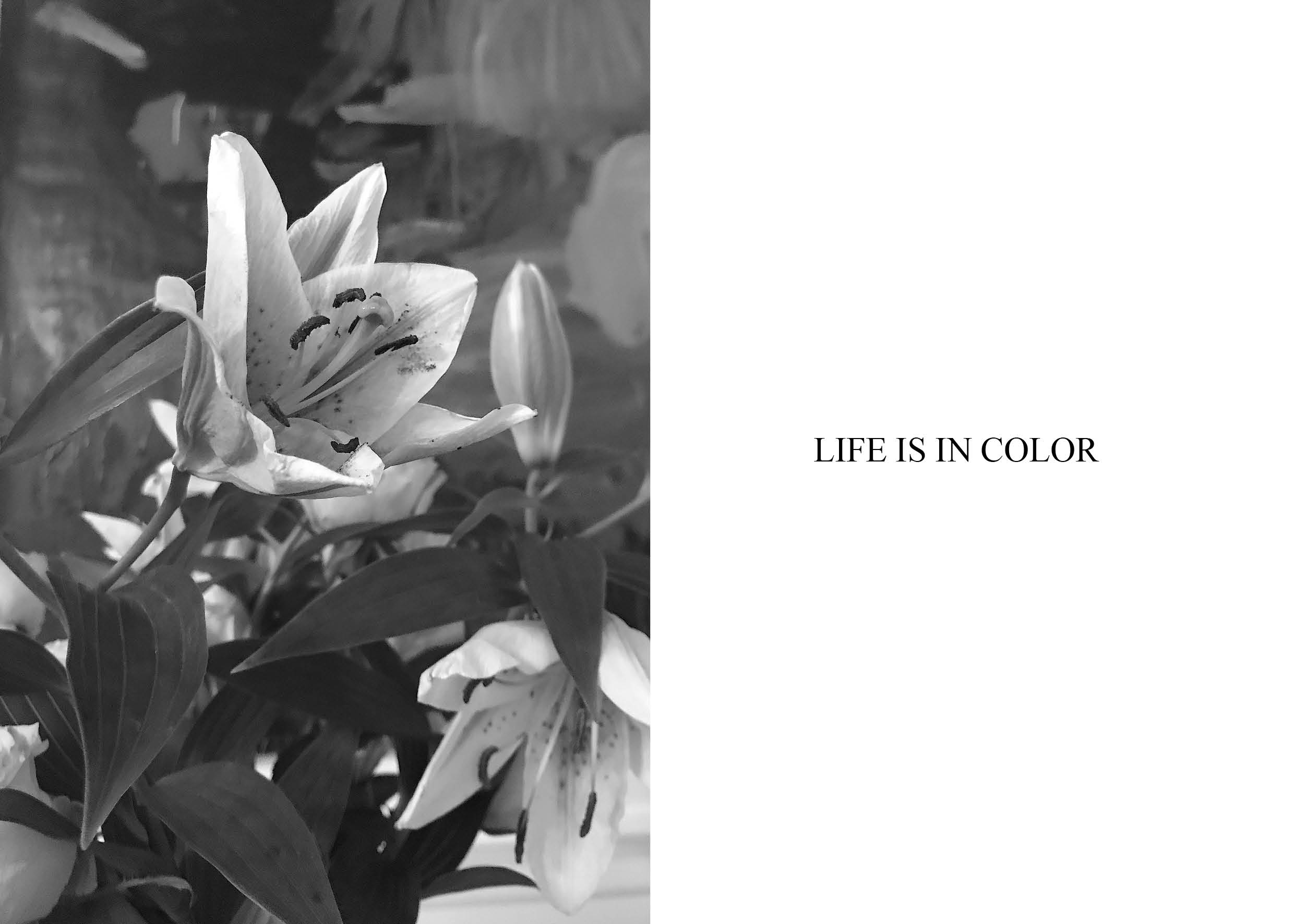 blomster, flowers, life is in color