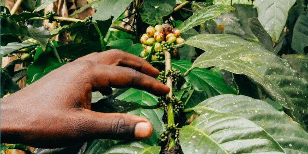 Lokale Wirtschaft in Uganda