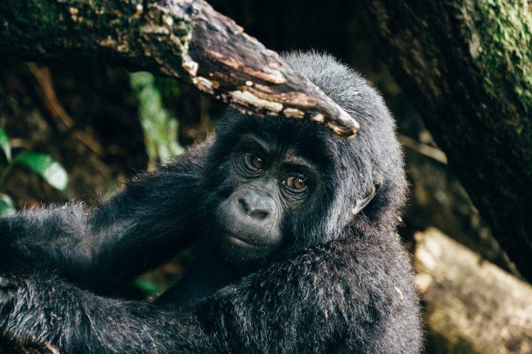 Du schützt die Natur- und Tierwelt
