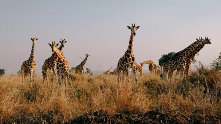 Unberührte Natur in Uganda