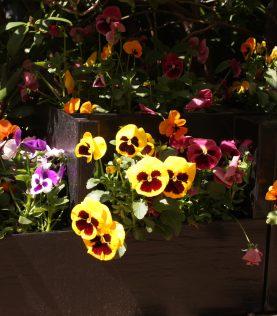 Fleurs d'été de jardin