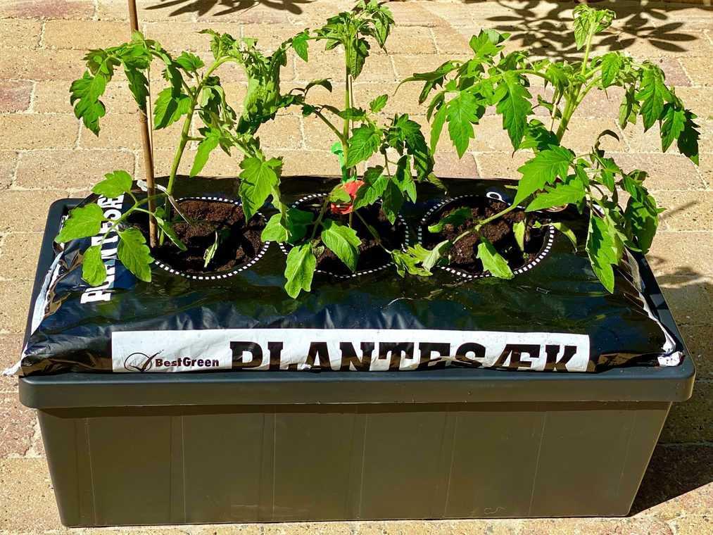Homefarm mit Tomatenpflanzen