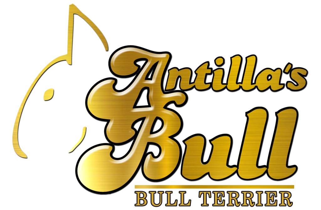 logo antillas bull ilde mr mad 3