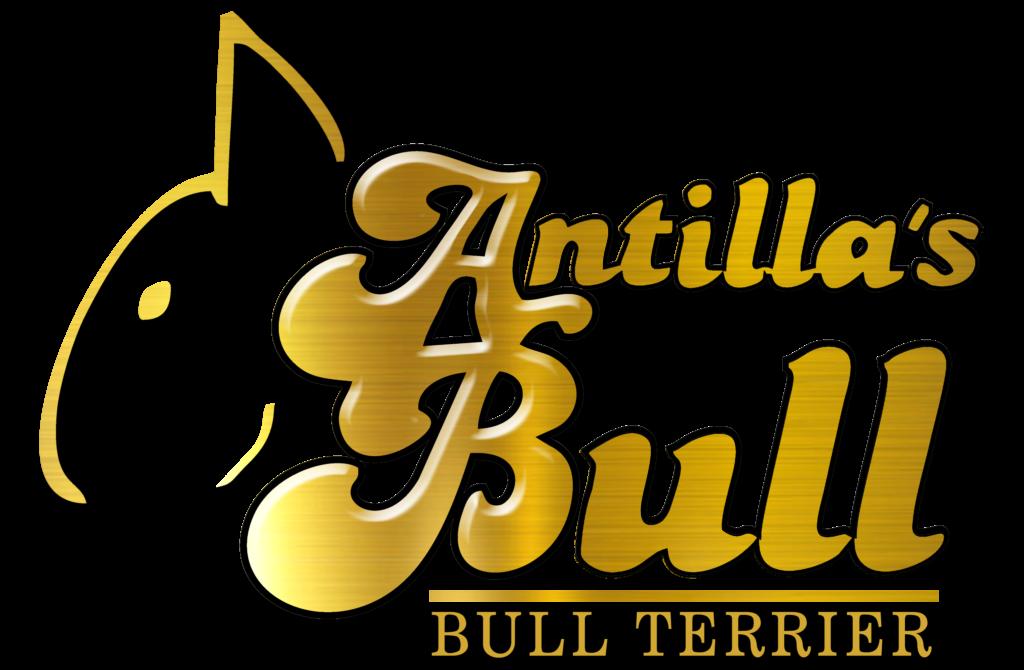 logo antillas bull ilde mr mad 3