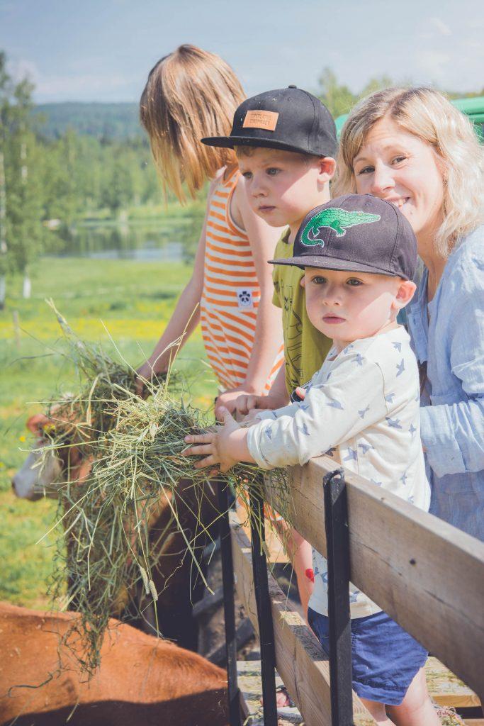 Vi får på traktorvagnen och matar kossorna