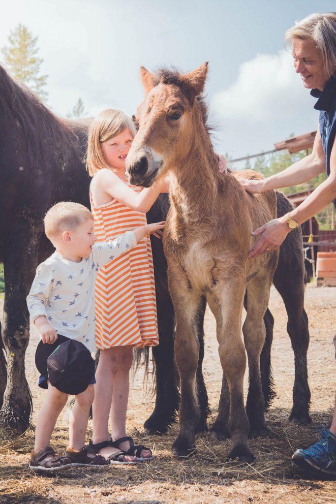 Barnen klappar ett av fölen på gården