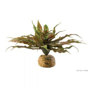 Exo Terra Star Cactus