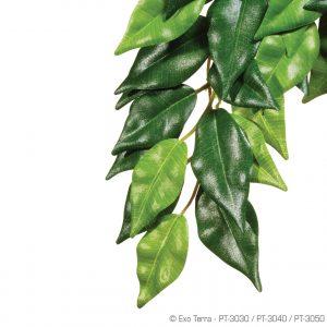 Exo Terra Ficus