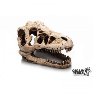 Giganterra T-Rex kallo