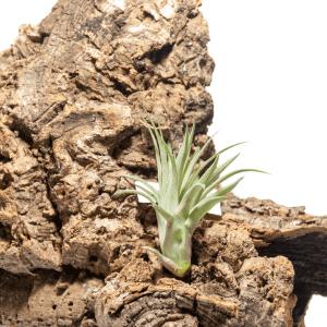 Kasvit ja sammaleet