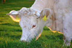 Pourquoi manger végé ne sauvera pas la planète-Alimentation Intégrative