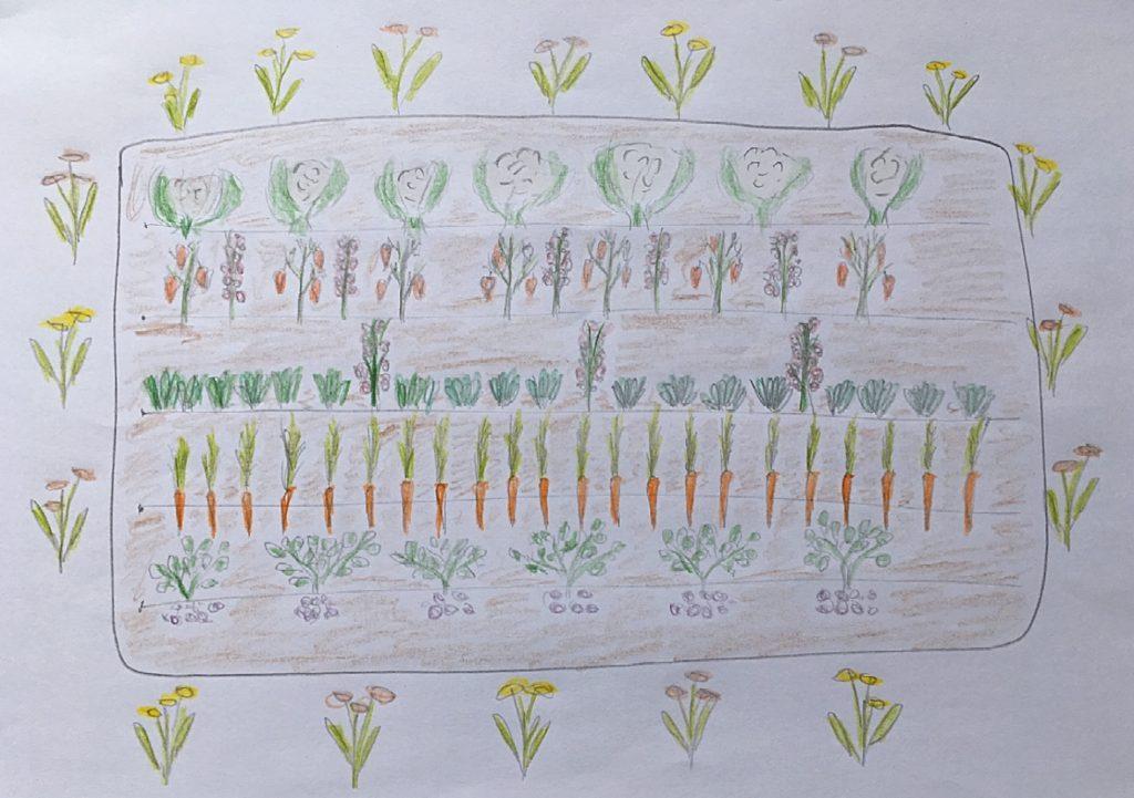 Zeichnung mit gemischten Kulturen auf einem Beet.