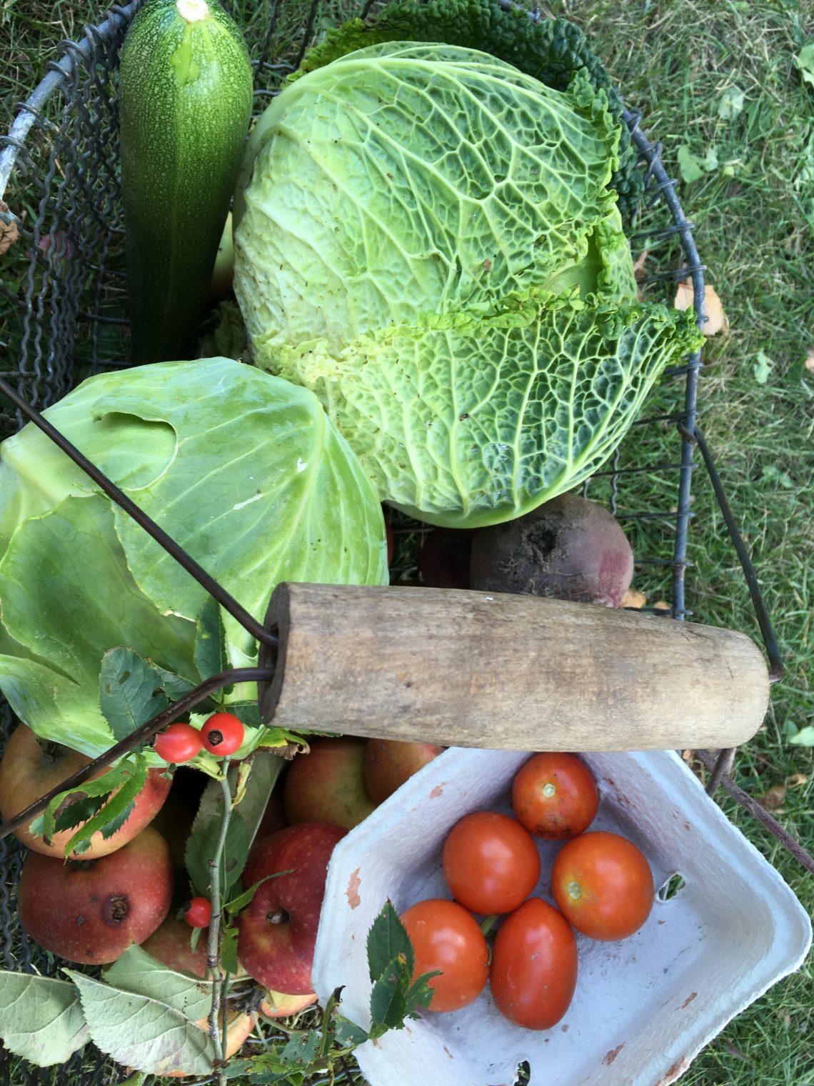 Frisch geerntet aus dem eigenen Garten