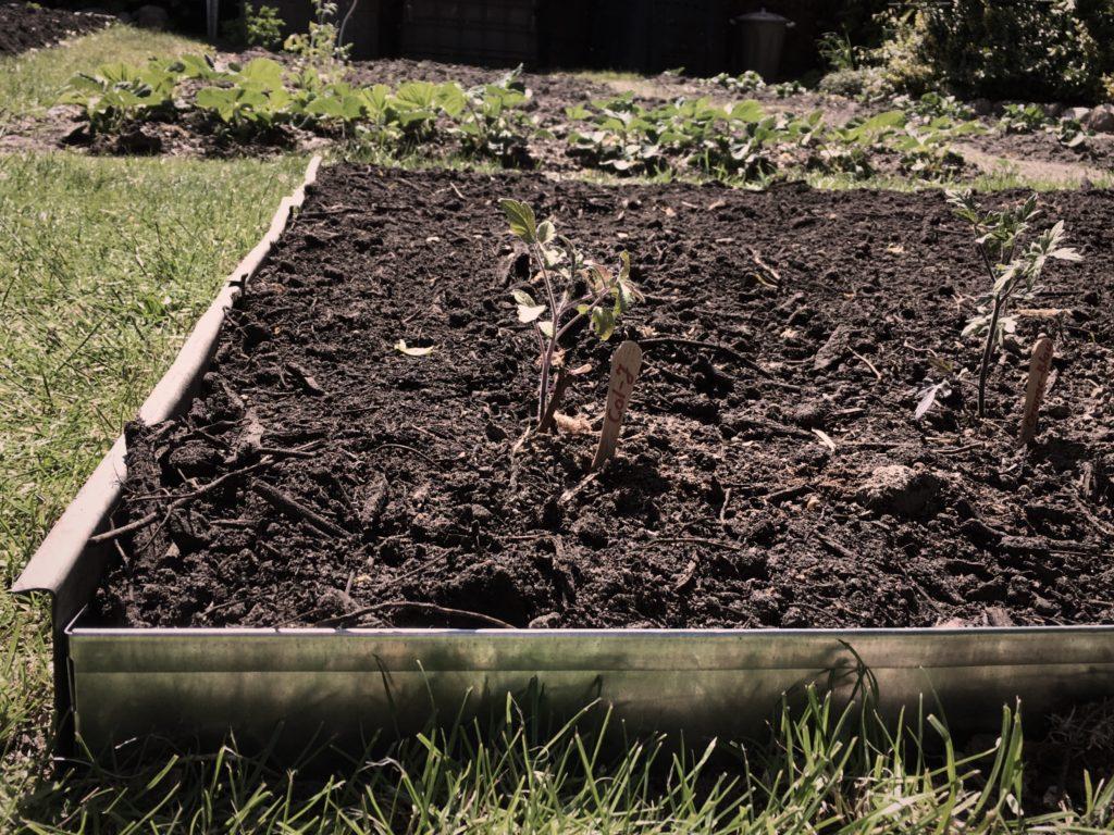 neues Beet auf Rasen, eingefasst mit Rasenkantenblechen