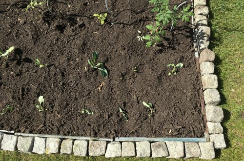 Beet mit Komposterde und frisch gepflanztem Gemüse.