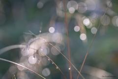 Evalill_1767_regndroppar