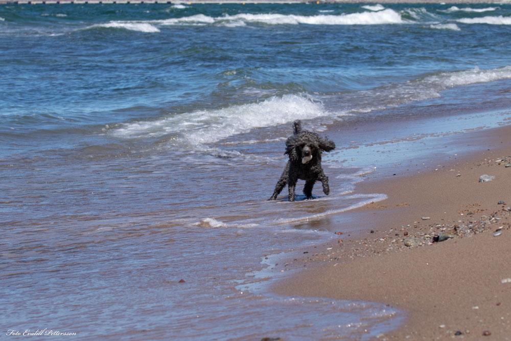 Bolt på stranden
