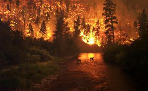 10 Deadliest Wildfires in World History